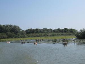 Birds feel at home in the Danube Biosphere Reserve